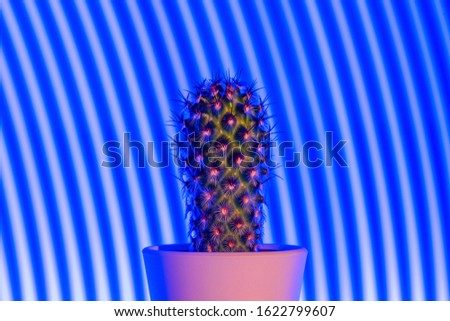 Cute small cactus on abstract blue light background