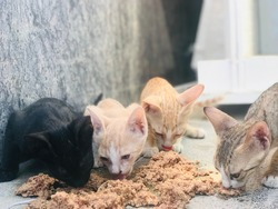 Cute small cats eating food in a street. 4 different color cats isolated black color