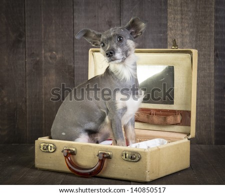 Cute small dog in suitcase