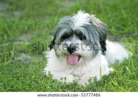 Cute small dog resting in the grass