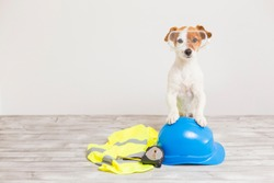 cute small dog with protection equipment: goggles, standing on a blue helmet, yellow reflective vest and meter. Construction concept. white background