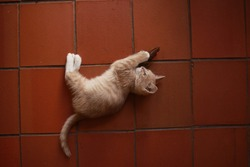 Cute small ginger tabby kitten lying on a terracotta tile floor playfully clawing at a brown toy mouse
