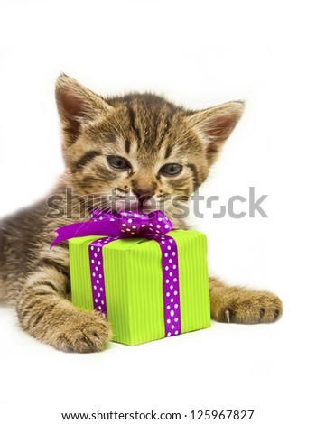 Cute small kitty with green gift box