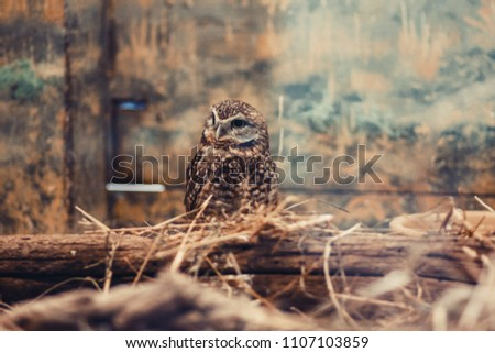 Cute small owl in aviary. Shallow focus. Film grain effect.