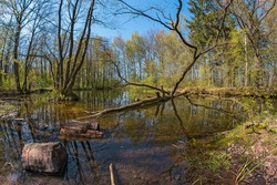 Cute small pond in the spring forest