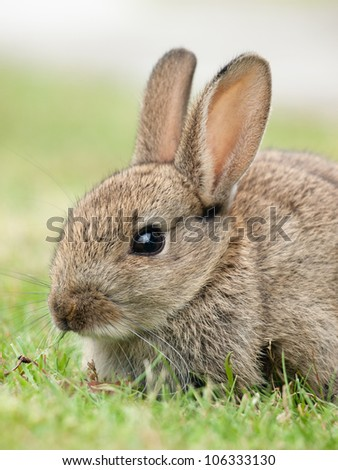 Cute small rabbit