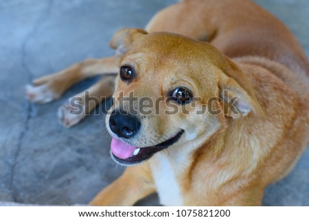 cute smiling dog looking at the camera #1075821200