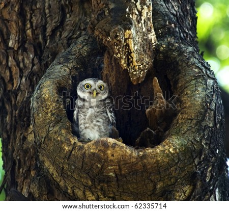 Stock Photo Cute smiling Owl