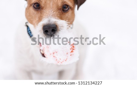 Cute snout and nose of dog playing outdoor at winter day
