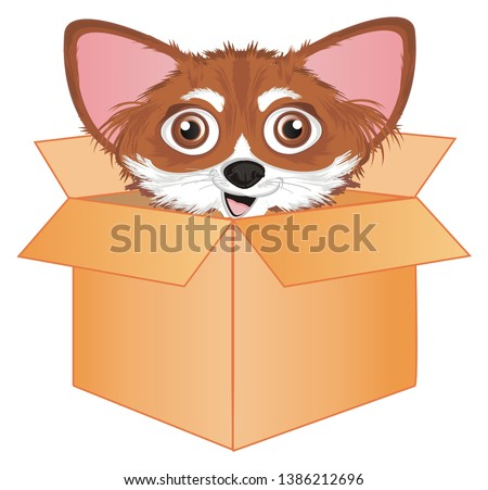 cute snout of chihuahua on paper box