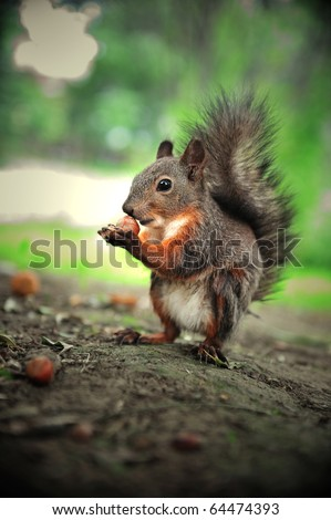 cute squirrel eat hazelnut