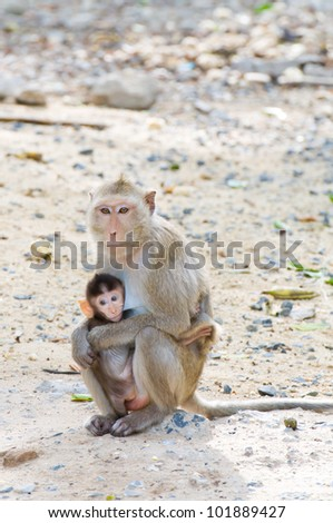 cute squirrel monkey with baby