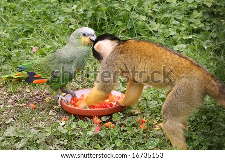 cute squirrel monkey with parrot