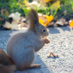 cute squirrel sitting on the road in the park
