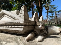 Cute stray cat is sitting near ancient sculpture in museum turkey istanbul