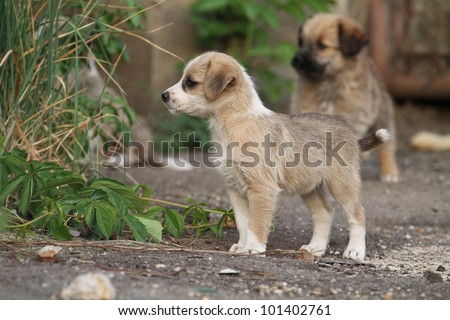 Cute stray puppies