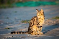 Cute street cat on the street of Georgia at sunrise with warm light