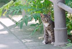 Cute street kitten outdoors.