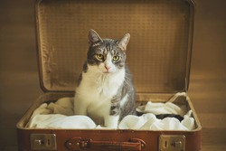 Cute striped sad stray cat is sitting in an old brown suitcase and waiting for new owners to take him home. Journey.