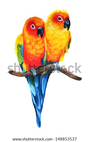Stock Photo Cute Sun Conure Or Sun Parakeets Isolated On White Backgro...