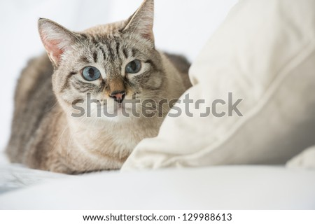 Cute tabby cat at home - laying on sofa and looking wary