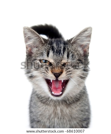 Cute tabby cat crying with one eye closed on white background