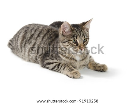 Cute tabby cat laying down on white background