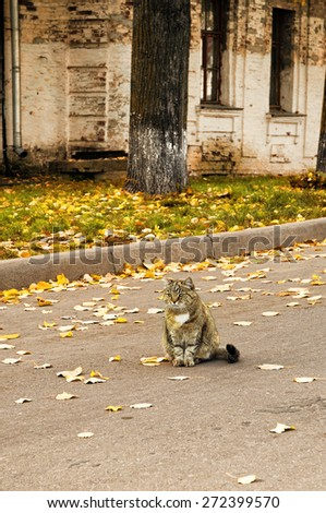 Cute tabby cat sitting on the road among the fallen leaves and looking thoughtfully into the distance