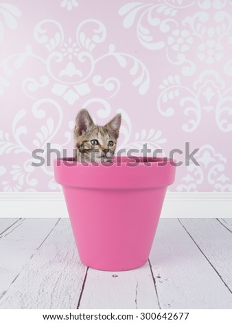 Cute tabby kitten cat in pink flower pot in a living room setting with pink wallpaper
