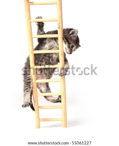 Cute tabby kitten climbing wooden ladder on white - stock photo