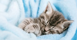 Cute Tabby kitten closed his eyes and doze nap relax. Cat kid pet. Small Tabby gray mammal animal kitten on color blue plaid background. Fluffy Cat with mustache. Long web banner.
