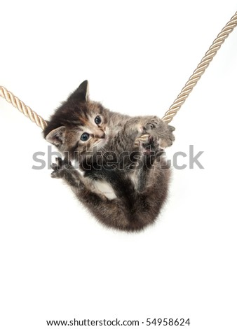 Cute tabby kitten grasping a rope on white background