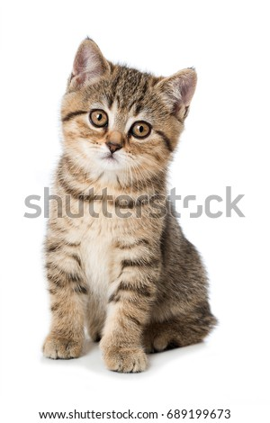 Cute tabby kitten isolated on white background #689199673