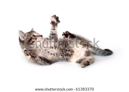 Cute tabby kitten laying down and playing on white background