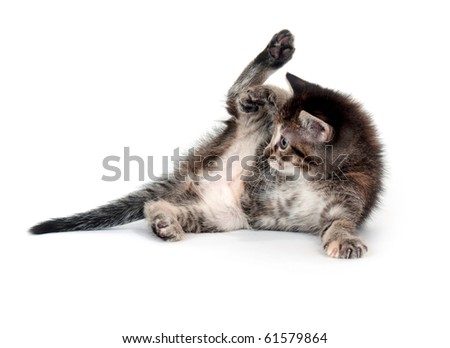 cute tabby kitten laying down with its leg in the air on white background