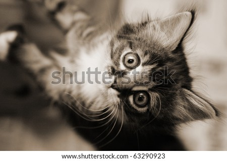 Cute tabby kitten looking up. Black and white image.