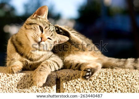 Cute tabby kitten lying on the wall and scratching its head. Selective focus.