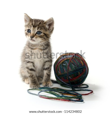 Cute tabby kitten on white background with ball of yarn