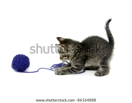 Cute tabby kitten playing with blue ball of yarn on white background