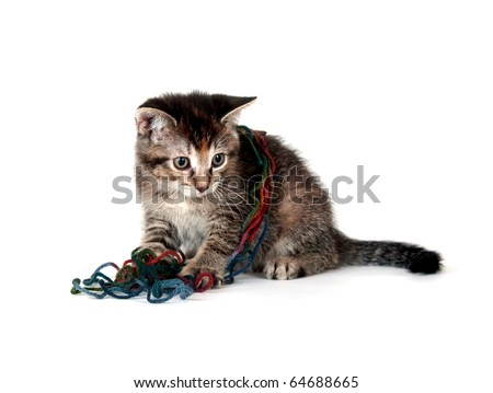 Cute tabby kitten playing with colorful strings of yarn on white background