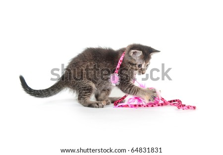 Cute tabby kitten playing with pink toy on white background