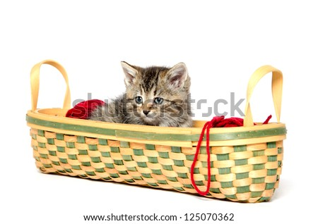 Cute tabby kitten sitting in basket with red yarn on white background