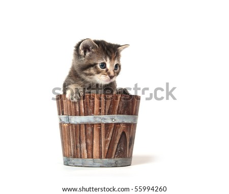 cute tabby kitten sitting inside of wooden container
