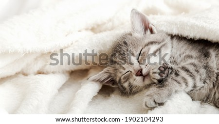 Cute tabby kitten sleep on white soft blanket. Cats rest napping on bed. Comfortable pets sleep at cozy home. Long web banner. Stock fotó ©