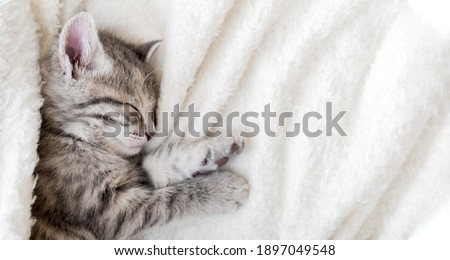 Cute tabby kitten sleeping on white soft blanket. Cat rest napping on bed. Comfortable pet sleeping in cozy home. Top view Long web banner with copy space Stock fotó ©