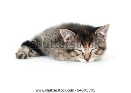 Cute tabby kitten taking a nap on white background