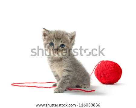 Cute tabby kitten with red ball of yarn on white background