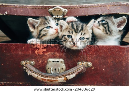 Cute tabby kittens in vintage suitcase on a wooden background