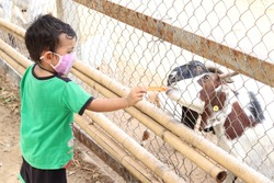 Cute Thai boy short hair Wear a green shirt Put on a mask Feeding the goats in cages with carrots in a fun and friendly. idea for activity to teach children how to make merit. Happily.
