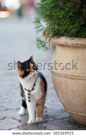 Cute three color cat wearing necklace with brown gems and orange eyes
